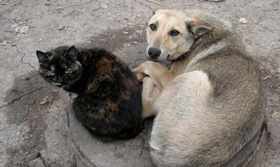 დადგენილება შინაური ცხოველების მოვლა-პატრონობის წესის დასამტკიცებლად